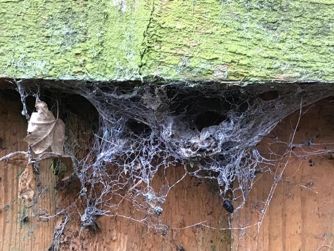 We saw spider webs
