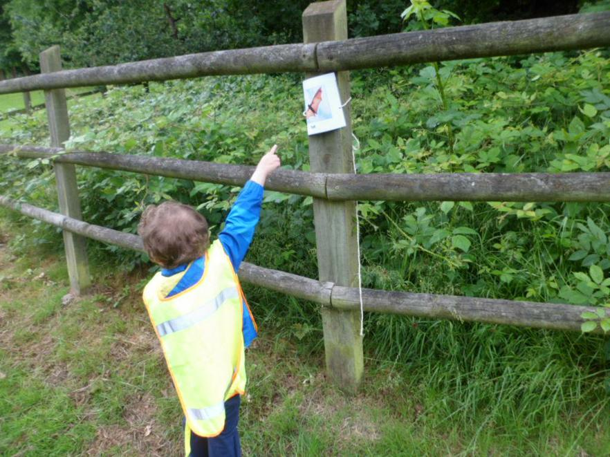 We looked for different animals, insects and birds