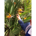 These flowers are called Birds of Paradise.