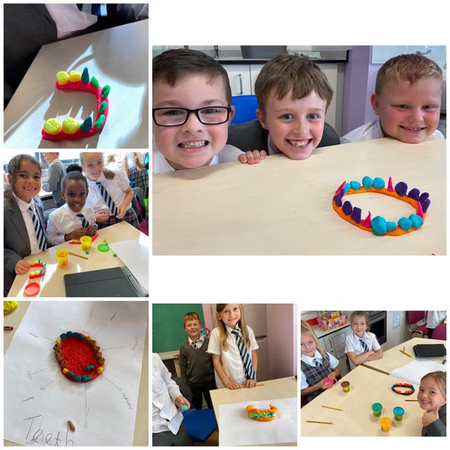Pupils learning all about the different types of teeth and their function