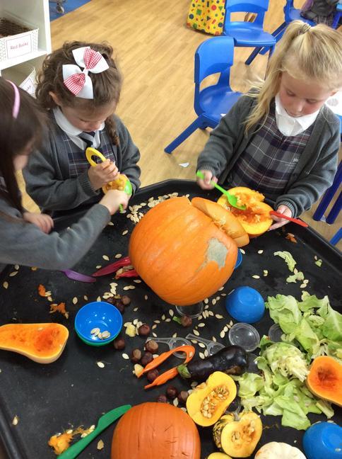 Pumpkin investigations!