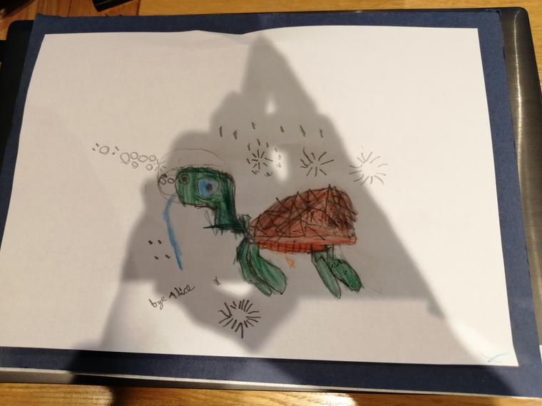 Alice's terrific turtle