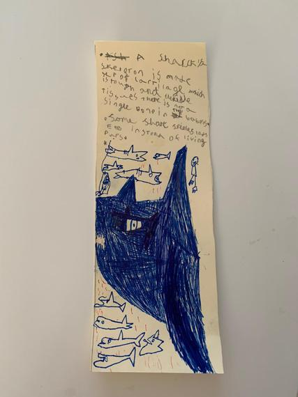 Troy's shark bookmark