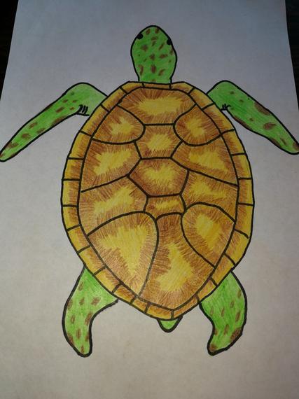 Jasmine's turtle