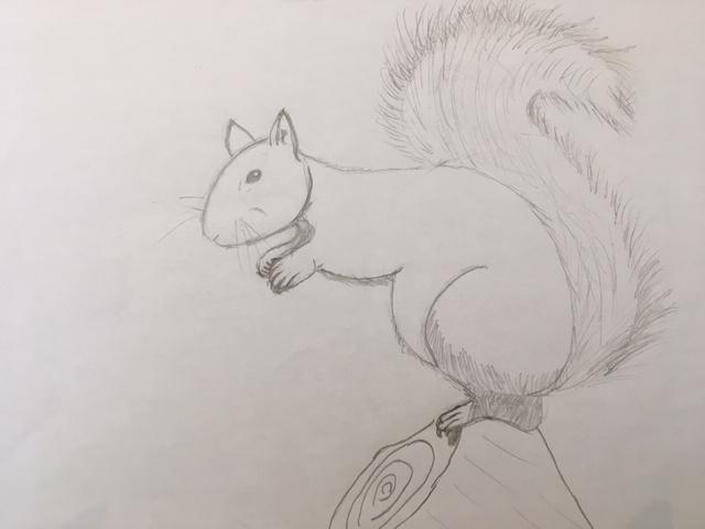 Jack's squirrel