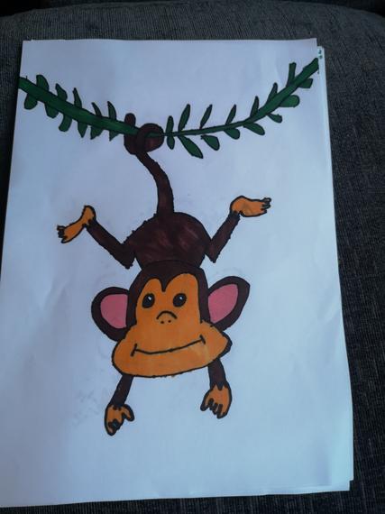 Bailey's monkey