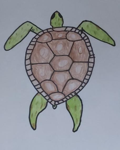 Evie's turtle