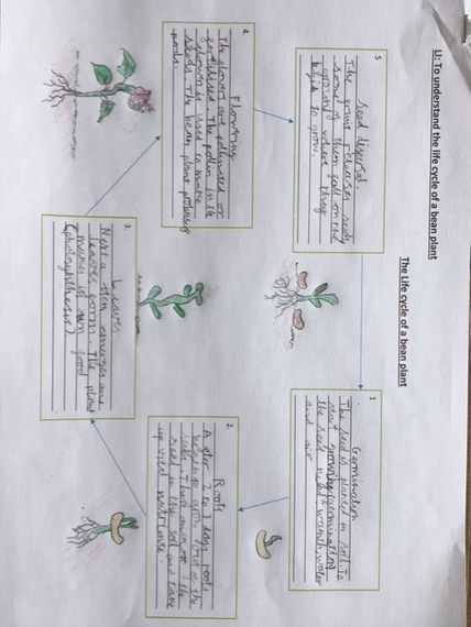 Jack's plant life cycle