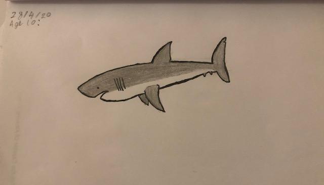 Vinny's shark