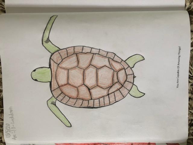 Vinny's turtle