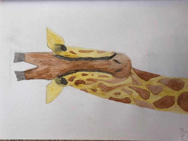 Vinny's giraffe