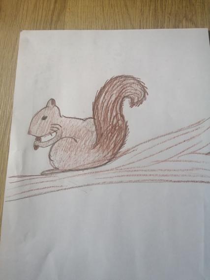 Tobia's squirrel