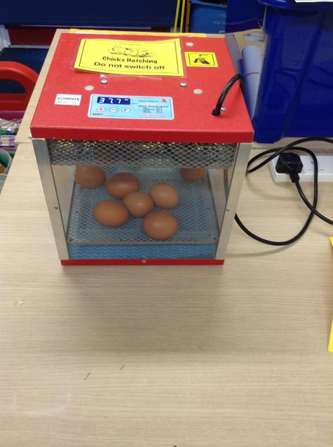 The eggs are kept warm
