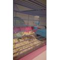 Mason's Hamster