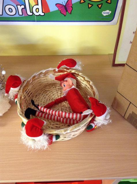 Elfie asleep in his basket