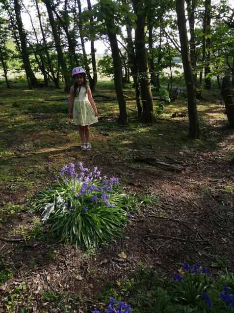 Maya walking in the bluebells