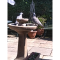 Two pigeons drinking from our water fountain