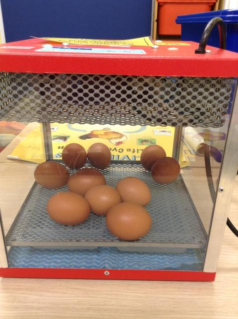 Ten eggs arrive in an incubator