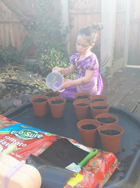 Zoe is busy watering her tomato plants.