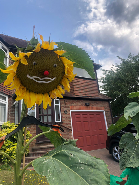 A smiling sunflower spotted on my morning run.