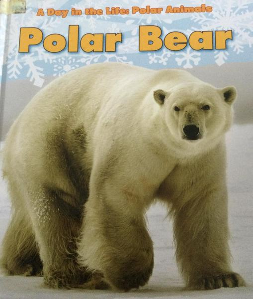 We learn facts about polar bears