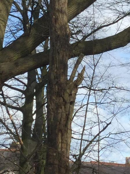 Can you see the woodpecker holes?