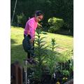 Krithi watering the plants in her garden