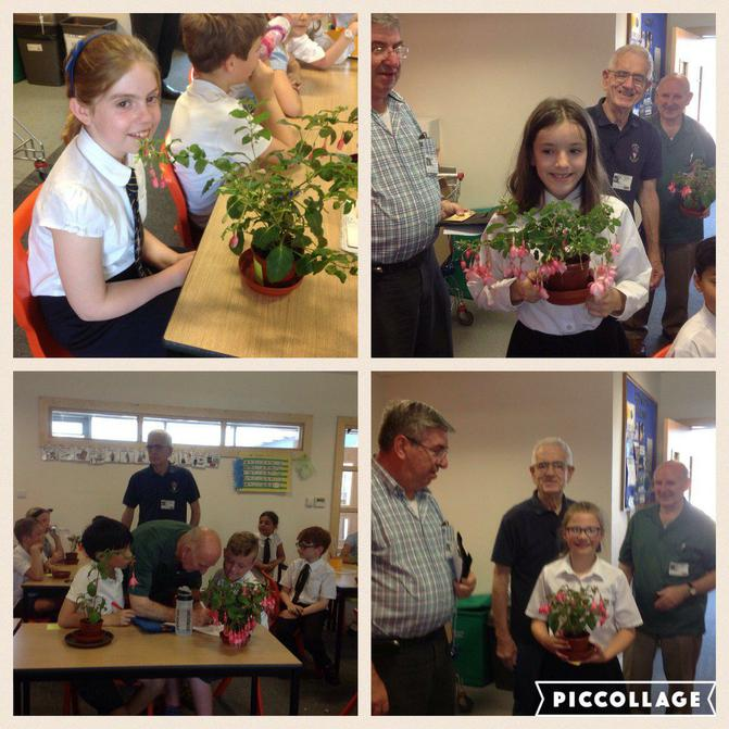 Y5 grow and compare their fushia plants