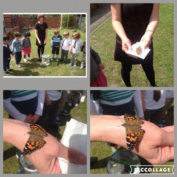 Nursery release butterflies