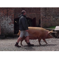 We saw the Farmer walking a pig to the field.