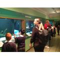 The aquarium.