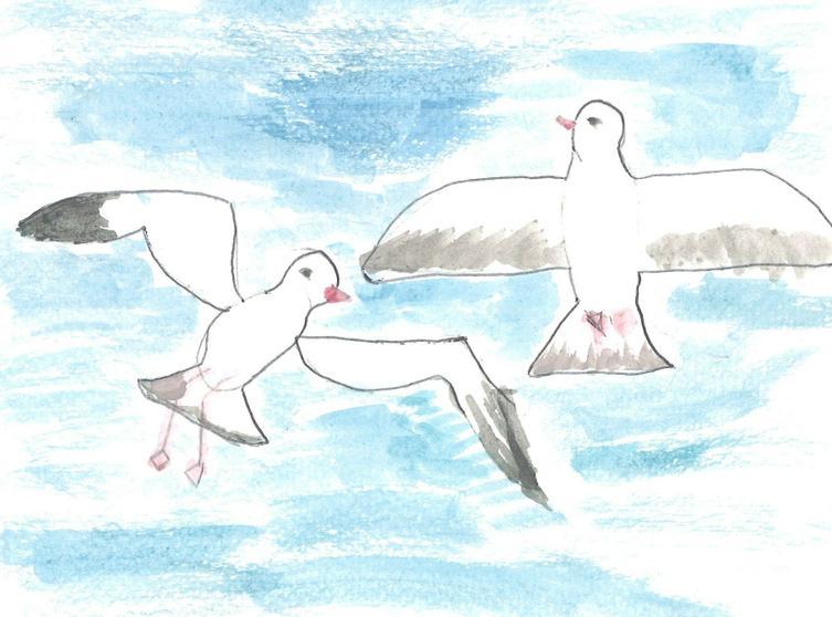 Gulls - by Mariam