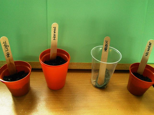 Wk 1: All test plants showing no growth yet.