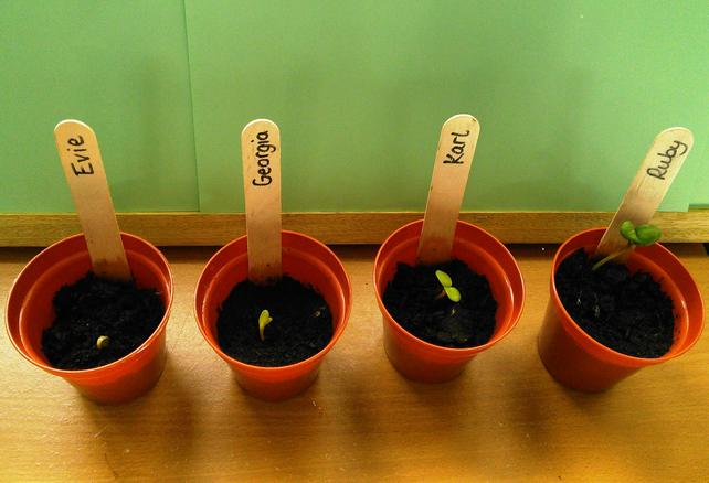 First few to shoot, showing seeds have germinated.