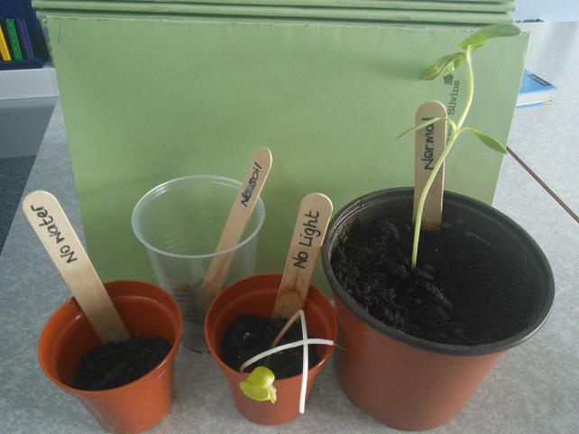 Wk 3: Light, water, soil & space help growth!