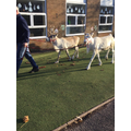 Say hello to dancer and prancer