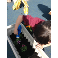 We watered our plants.