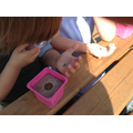We studied the sunflower seeds.