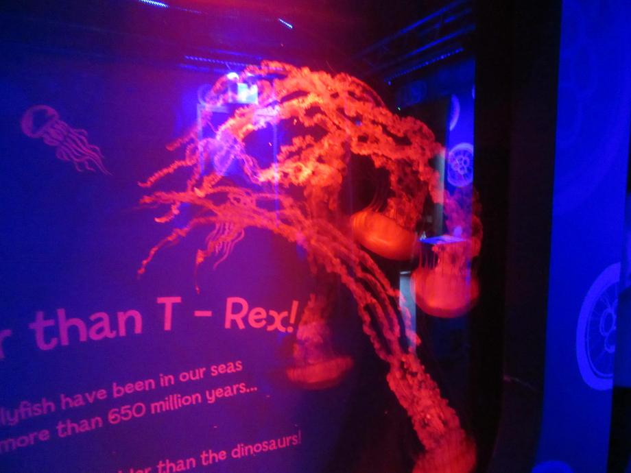Jellyfish have been around since before dinosaurs.