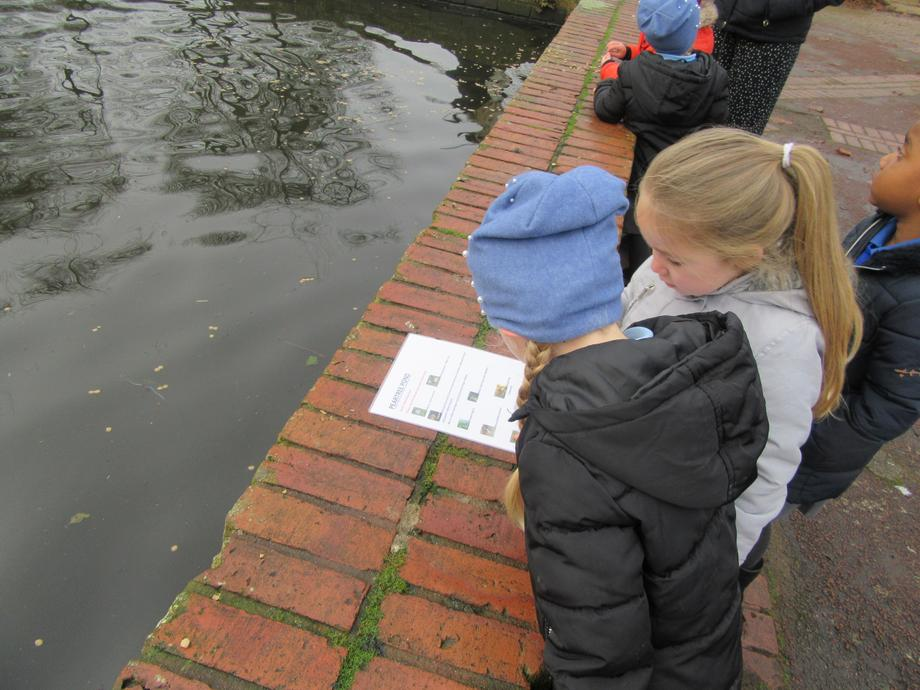 We looked for wildlife that lives on the pond.