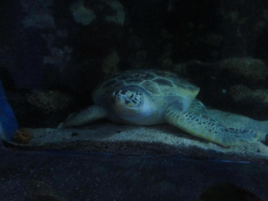Sea turtles can live for over 100 years.