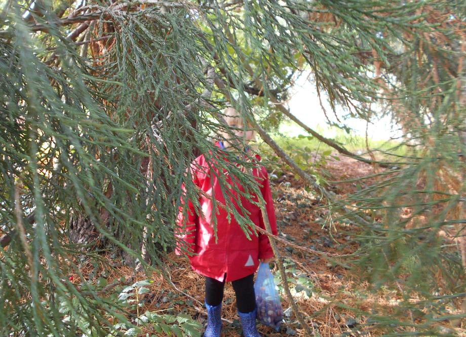 We found a tree with very low branches.