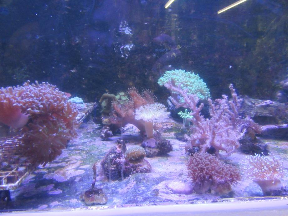 We learned that coral is alive.