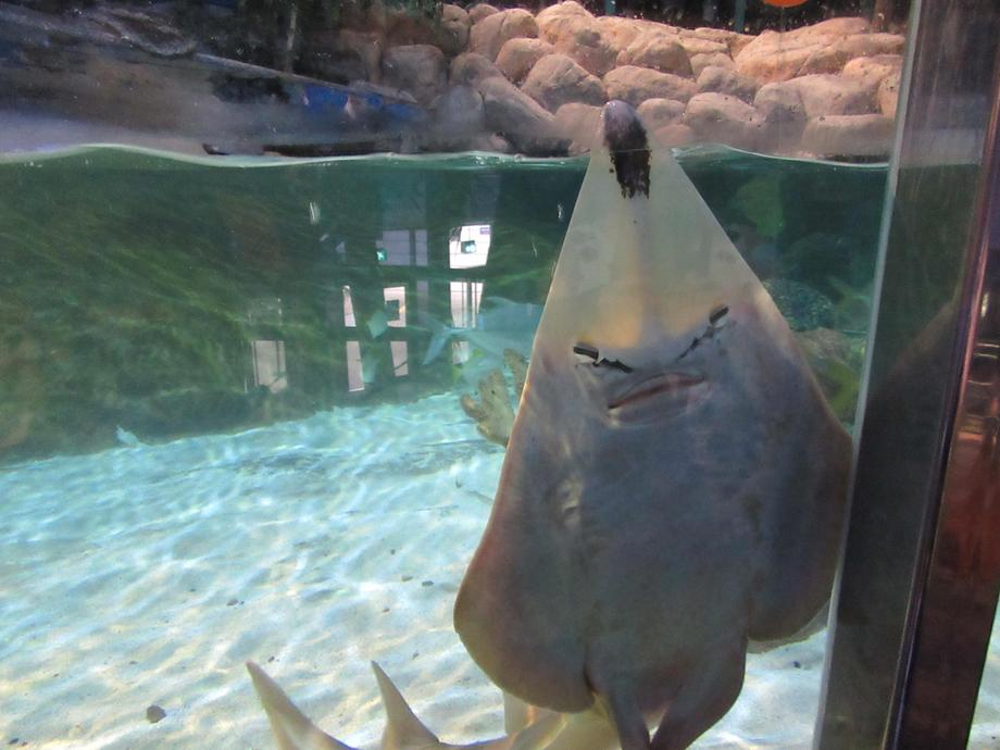 This ray came up to say hello.