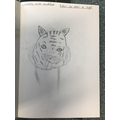 We have been learning how to draw a tiger
