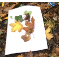 Forest school natural pictures