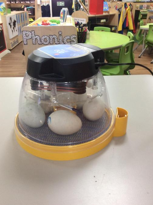 I wonder what will hatch out of these eggs?