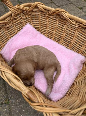 Rohan's new puppy