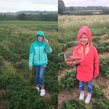 Strawberry Picking in the Rain