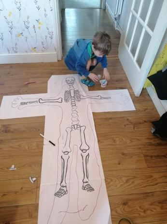 Learning all about the body
